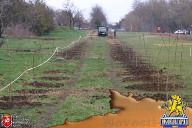 Под Симферополем высадили аллею из 300 деревьев (ФОТО) - «Симферополь»