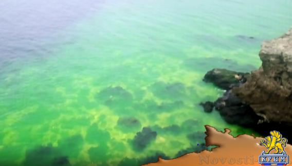 Прокуратура заинтересовалась ярко-зеленой водой в бухте Круглая - «Экология»