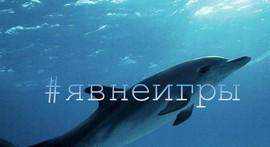 Как уплыть от «Синего кита» - «Интервью»