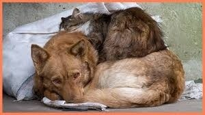 В Керчи хотят потратить 2,3 миллиона на отлов и умерщвление бездомных животных - «Керчь»