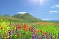 В воскресенье в Крыму сильные ливни - «Общество»