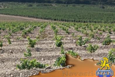 «Массандра» восстанавливает работу с европейскими виноградными питомниками  - «Бизнес»