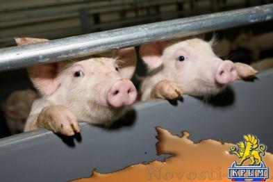 Еще в одном районе Крыма зафиксирована африканская чума свиней: Введен режим ЧС - «Симферополь»