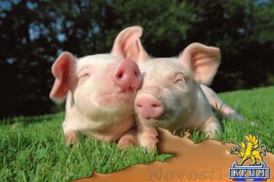 Африканская чума свиней зафиксирована ещё в одном селе Крыма - «Симферополь»