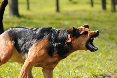 В Госдуме предложили ввести уголовную ответственность за агрессию животных  - «Новости Севастополя»