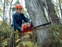 Взыскан ущерб за лесонарушение     - «Происшествия Крыма»