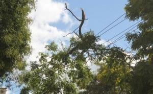 На улице Парковой аварийные деревья рвут провода - «Керчь»