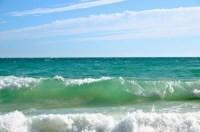 В Балаклаве из-за медуз море превратилось в кисель - «Общество»