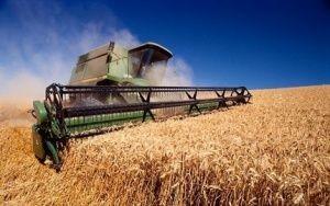 Аксенов надеется на рекордный урожай зерновых  - «Экономика»