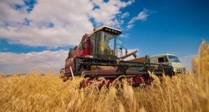 За год сельское хозяйство Крыма получило 2,5 миллиарда - «Керчь»