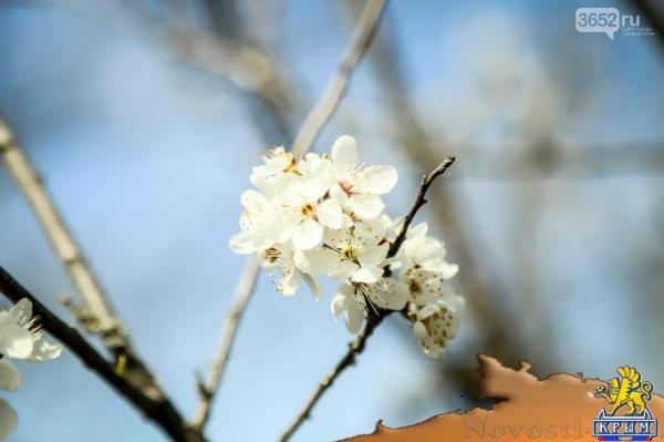 Горные цветы в крыму — img 10