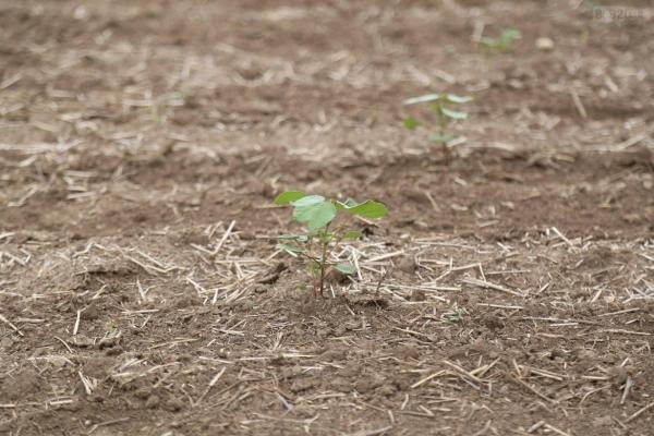 Из-за засухи в Крыму придумали пшеницу, которая растет без воды (ФОТО) - «Новости Севастополя»