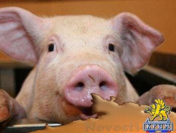 За четыре года европейских реформ на Украине радикально сократилось поголовье свиней - «Экономика Крыма»