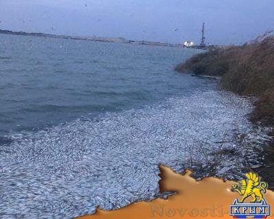 Чем травят рыбу на Херсонщине? - «Происшедствия Крыма»