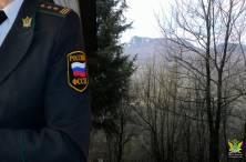 Судебные приставы Крыма взыскали миллионный ущерб за незаконную вырубку деревьев, занесенных в Красную книгу - «Новости Судебных Приставов»